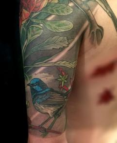 Detail - Waratah and blue wren sleeve tattoo