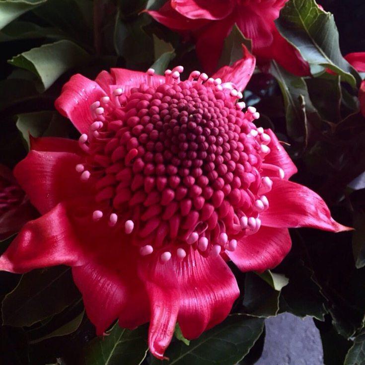 clareketontattoos_botanicals