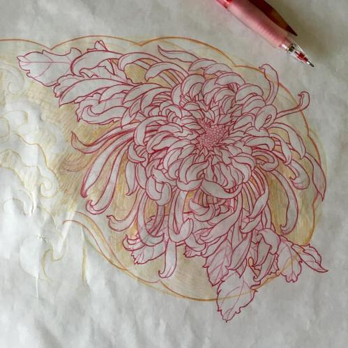 clareketon_tattoo_wip_freehandsketch_chrysanthemum