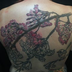Work in Progress - Cherry Blossom and Superb Fairywren